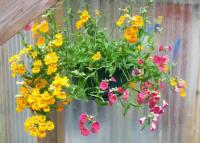 flower baskets with Alaskan favorites