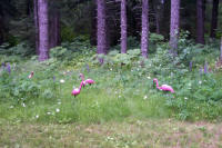 flamingos in Alaska?
