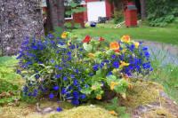 Alaska flower baskets